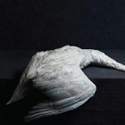 amenra-massvi-237x237